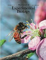 cover-ExperimentalBiology-2004-09